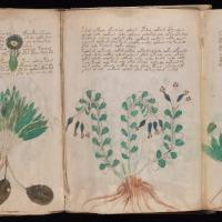 El verdadero significado del manuscrito Voynich